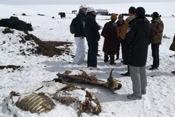 Snowstorm Disaster Assessment in Qinghai, China